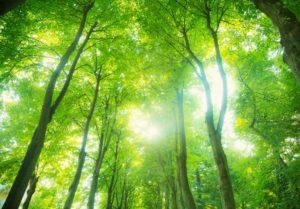 Earth Day southwestern Virginia